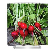 Radish Harvest Shower Curtain