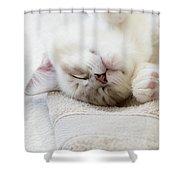 Ragdoll Kitten Asleep Shower Curtain
