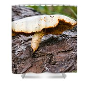 Raggedy Toadstool Shower Curtain