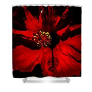 Raging Red Hibiscus Shower Curtain