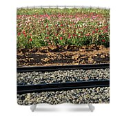 Rails And Roses Shower Curtain
