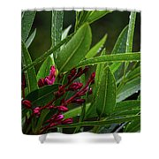 Rain Coated Blades Of Grass And  Deep Pink Petals Shower Curtain