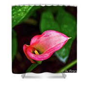 Rain Coated Pink Calla Lily Shower Curtain