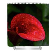 Rain Coated Red Anthurium Shower Curtain
