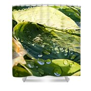 Rain Collecting On Hosta Leaves Shower Curtain