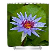 Rain Drenched Blue Lotus In Grand Cayman Shower Curtain