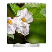 Rain Drenched Pair Shower Curtain