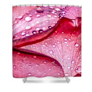 Rain Drop Jewels  Shower Curtain