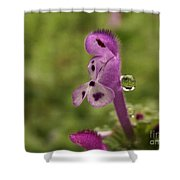 Rain Drop Olympics On Dead Nettle Flower Shower Curtain