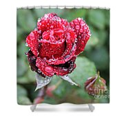 Rain Drop Rose Shower Curtain