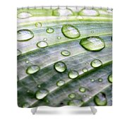 Rain Drops On A Leaf Shower Curtain