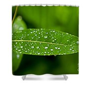 Rain Drops On Leaves #1 Shower Curtain