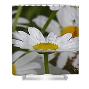 Rain Drops On Pedals Shower Curtain
