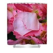 Rain Falls On Petals And All Shower Curtain