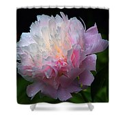 Rain-kissed Peony Shower Curtain