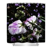 Rain Kissed Petals. This Flower Art Shower Curtain