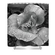 Rain Kissed Rhine Flower Shower Curtain
