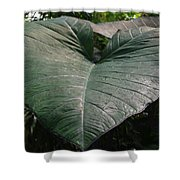 Rain On Leaf Shower Curtain