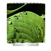 Rain On Leaf Shower Curtain