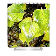 Rain On The Fall Lilac Shower Curtain