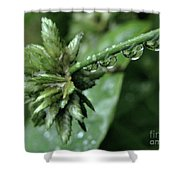 Rain On The Umbrella Plant 2 Shower Curtain