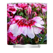 Rain Soaked Dianthus Shower Curtain