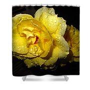 Rain Soaked Yellow Rose Shower Curtain
