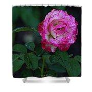 Rain Wet Rose Shower Curtain