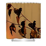 Rainbow And Copper Shower Curtain