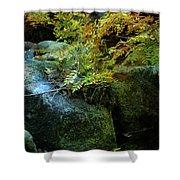 Rainbow Autumn Ferns At Pickle Creek 6303 H_3 Shower Curtain