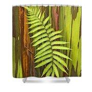 Rainbow Eucalyptus And Fern Shower Curtain