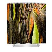 Rainbow Eucalyptus Bark Shower Curtain
