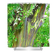 Rainbow Eucalyptus Shower Curtain