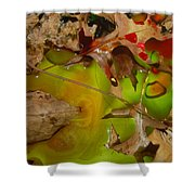Rainbow Leaves 3 Shower Curtain