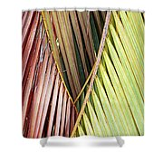 Rainbow Of Palms Gp Shower Curtain