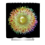 Rainbow Petals Shower Curtain