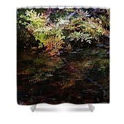 Rainbow Pickle Creek Reflections 6272 H_3 Shower Curtain