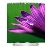 Raindrop On Purple Petal Shower Curtain