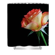 Raindrop Rose Shower Curtain by Tracy Hall