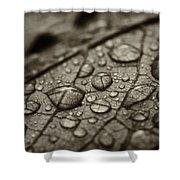 Raindrops #1 Shower Curtain