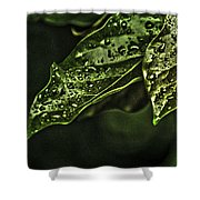Raindrops Hdr Shower Curtain