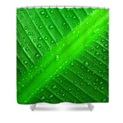 Raindrops ... Shower Curtain
