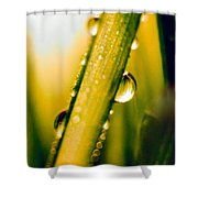 Raindrops On A Blade Of Grass Shower Curtain by Mariola Bitner