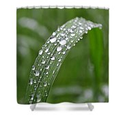 Raindrops On A Blade Of Grass Shower Curtain