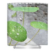 Raindrops On A Nasturtium Leaf Shower Curtain