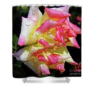 Raindrops On A Rose Shower Curtain