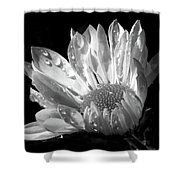 Raindrops On Daisy Black And White Shower Curtain