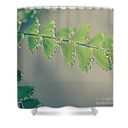 Raindrops On Ferns - Hipster Photo Square Shower Curtain by Charmian Vistaunet
