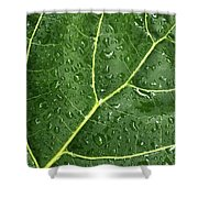 Raindrops On Fiddle Leaf Shower Curtain