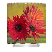 Raindrops On Gerbera Shower Curtain